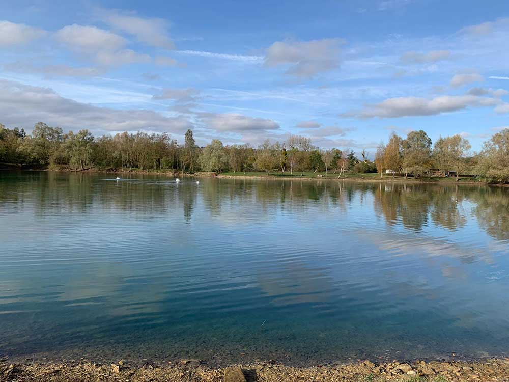 Mallard Swim Willow Lake