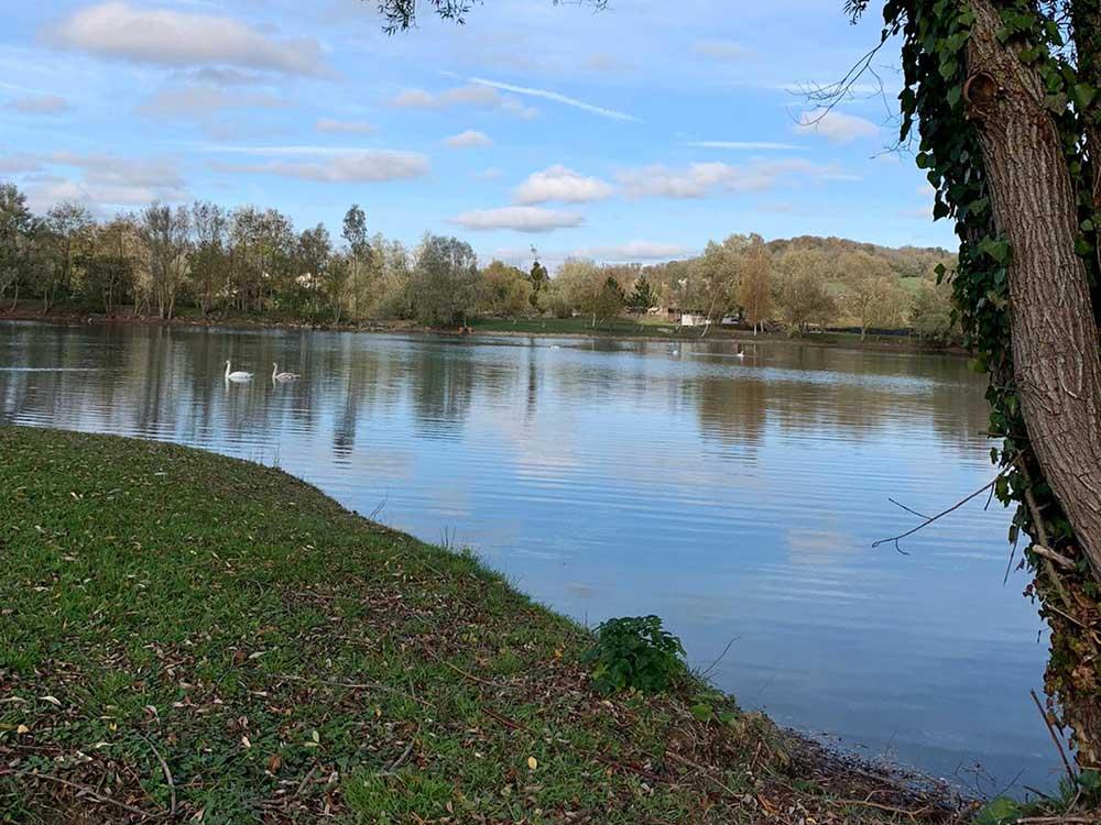 Teal Swim Willow Lake